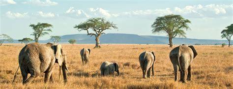 top   serengeti national par top