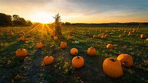Top, Pumpkin, Patches, In, The, Midwest