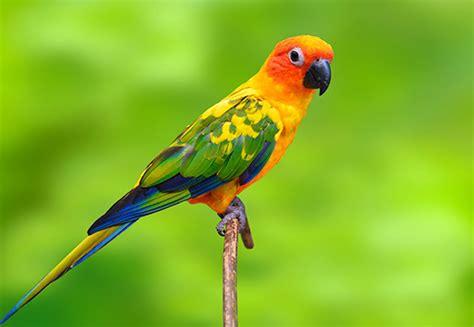 sun conure top 10 exotic birds