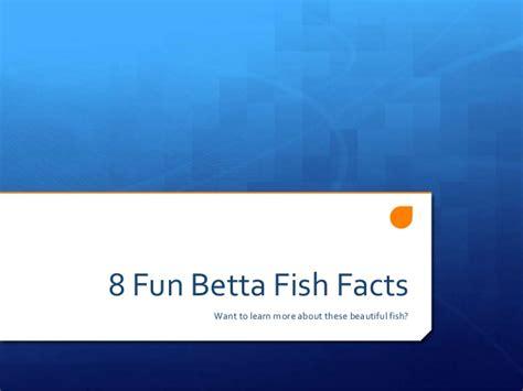 8 Fun Betta Fish Facts