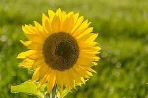 Bilder Blumen Kostenlos Downloaden : geburtstagskarten ausdrucken kostenloser download f r private zwecke der ~ Frokenaadalensverden.com Haus und Dekorationen