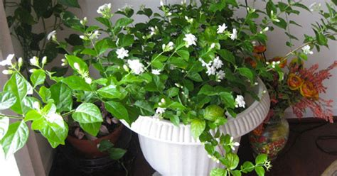 Bedroom Plants For Insomnia by These 7 Plants For The Bedroom Will Cure Insomnia And Help