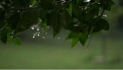 Gifs Nature Rain Giving Through Lana Yerin