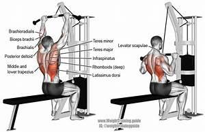 Bodybuilding110 Com  Back