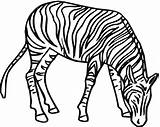 Zebra Coloring Pages Line Clipart Zebras Printable Drawing Clip Super Animal Clker Clipartbest Clipartmag Supercoloring Silhouettes Cliparts sketch template