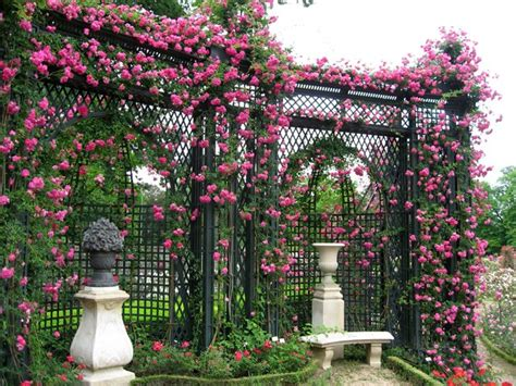 trellises garden 25 charming garden trellises and arbors garden lovers club
