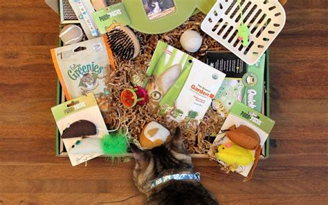 17536 Cat Box Coupon Code by Take 10 Your Purr Packs Subscription With Code 10off