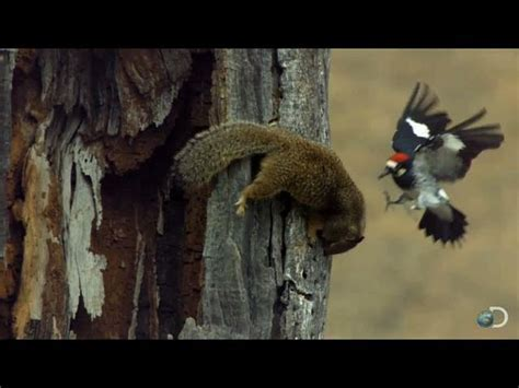 Woodpecker Guarding Its Acorns ? 1Funny.com