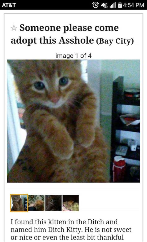 adopt  asshole kitten