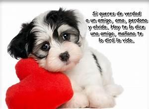 Frases Bonitas Amor Para Dedicar Imagenes Para Alguien Especial