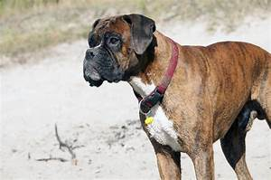 top five best dog foods for boxers With best dog food for boxers
