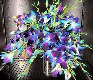 Blue Orchids Bridal Bouquet / Products / Local Florist in ...