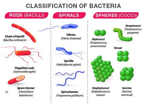 bacteria structure classification reproduction and its benefits