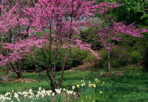 ornamental garden trees ornamental trees shrubs