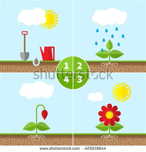 Plant Growth Stock Images, Royaltyfree Images & Vectors Shutterstock
