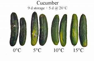 Don't store your cucumbers in the fridge | Root Simple