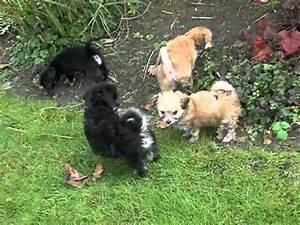 Boomer Pups Te Koop In Het Hezehof