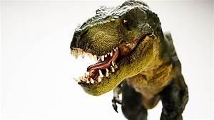 Wallpaper Dinosaur  Tyrannosaurus  T Rex  5k  Animals