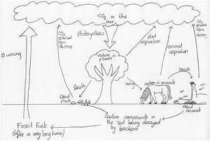 Draw A Well Labelled Diagram Of Carbon Cycle