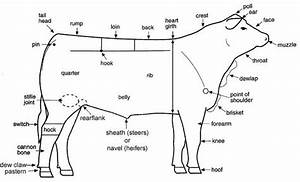 What Are The External Parts Of A Cow