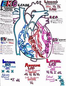 Hanson U0026 39 S Anatomy  U2014 Ekg And The Coronary Arteries U2026you U2019ll