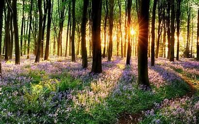 4k Ultra Wide Spring Grass Sunset Wallpapersafari