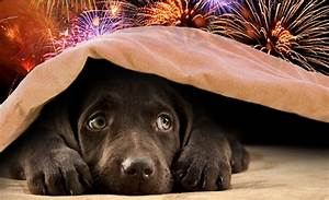 3 Tips to Help Your Pets During Fireworks Season - One ...