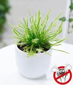 Fleischfressende Pflanze Pflege : fleischfressende pflanzen pflege tipps f r sie ~ A.2002-acura-tl-radio.info Haus und Dekorationen