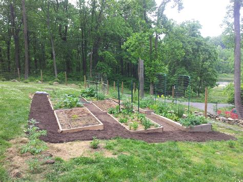 raised beds on drainfield gardening for beginners forum