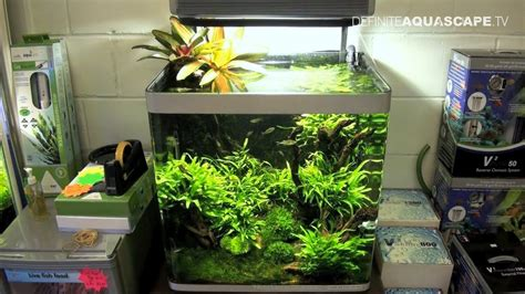 Aquarium Aquascaping Ideas by Aquascaping Aquarium Ideas From Aquatics Live 2011 Part