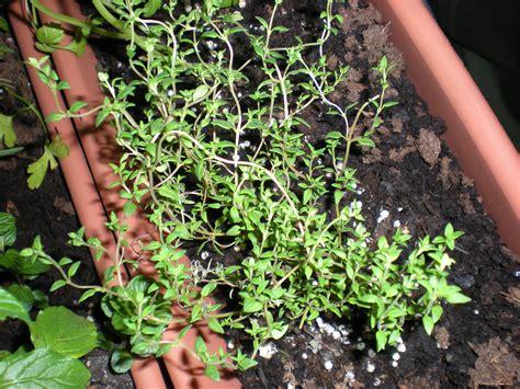 sun herbs sun h herb garden