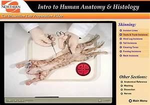 Cat Dissection Anatomy