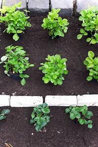 Pflanzen Schneiden Kalender : erdbeeren pflanzen wann ist der beste zeitpunkt garten gem se mehr pinterest erdbeeren ~ Orissabook.com Haus und Dekorationen