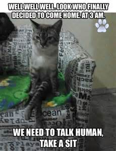 how to talk to a cat cat talk dump a day