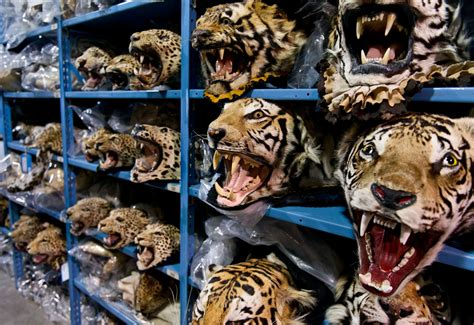 london summit intensifies battle  wildlife crime