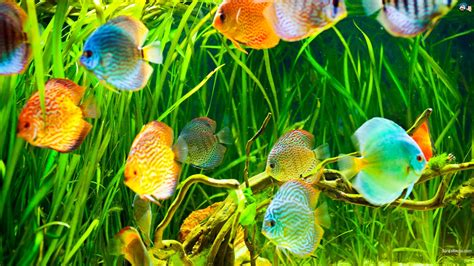 Aquatic Animals Wallpapers - aquatic hd wallpapers most beautiful places in the world
