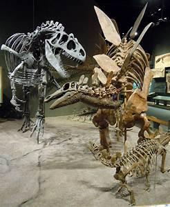 stegosaurus - definition - What is