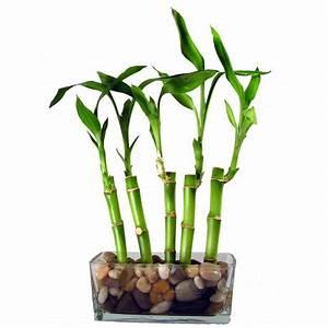 Bambous En Pot : sticker mural bambou d coration int rieur etiquette ~ Melissatoandfro.com Idées de Décoration