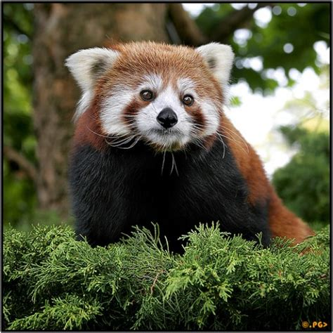 25 Most Amazing And Unusual Animals On Earth Hubpages