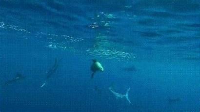Sea Gifs Barnorama Animated Ocean