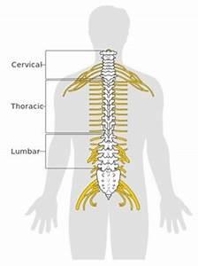Mri Brain Spine Diagram