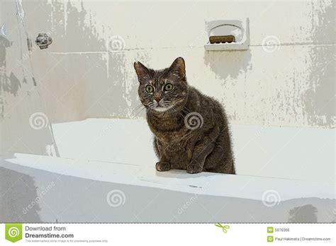 cat  bathtub royalty  stock image image