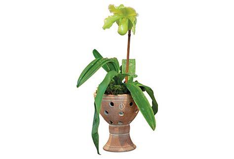 napa home 8 quot orchid pot retail 30 okl 15
