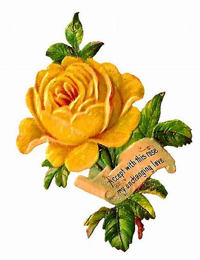 Yellow Rose Digital Label Flower Clip Clipart