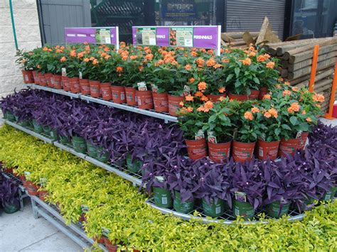 home depot gardening contrasting colors make a statement florida friendly