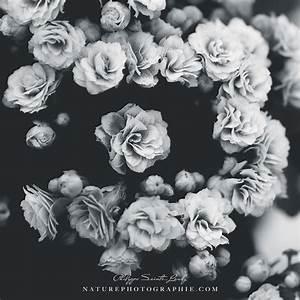 Plaid Noir Et Blanc : noir et blanc naturephotographie ~ Dailycaller-alerts.com Idées de Décoration