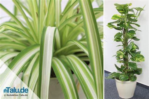 Wie Heißt Meine Zimmerpflanze by Zimmerpflanze Mit A Zimmerpflanze Bromelie Mit Glas