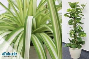 Pflegeleichte Zimmerpflanzen Mit Blüten : pflegeleichte zimmerpflanzen 8 bl hende und gr npflanzen ~ Sanjose-hotels-ca.com Haus und Dekorationen