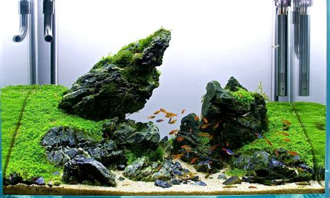 Aquascape Rocks by Can I Use Stones And Driftwood In My Planted Aquascape