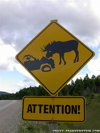 Signs Moose Funny Crazy Sign Road Street